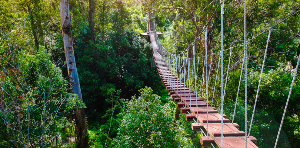 Rope suspension bridge between trees in a tropical forest